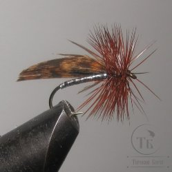 "Муха сухая Dry fly ( 22 ) "" Capercailli Brown Silver Caddis  "" крючок № 12"