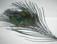 Peacock eyes md. 2шт black