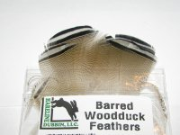 wood duck barred Hareline